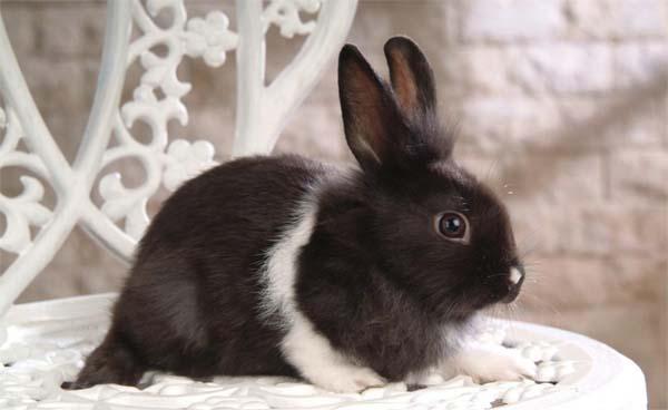 И кроликом животные и растения